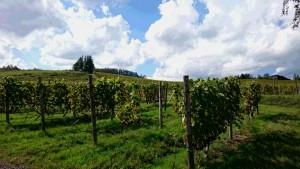 2015富良野ワイン